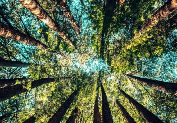 Austrália vai plantar 1 bilhão de árvores contra aquecimento global