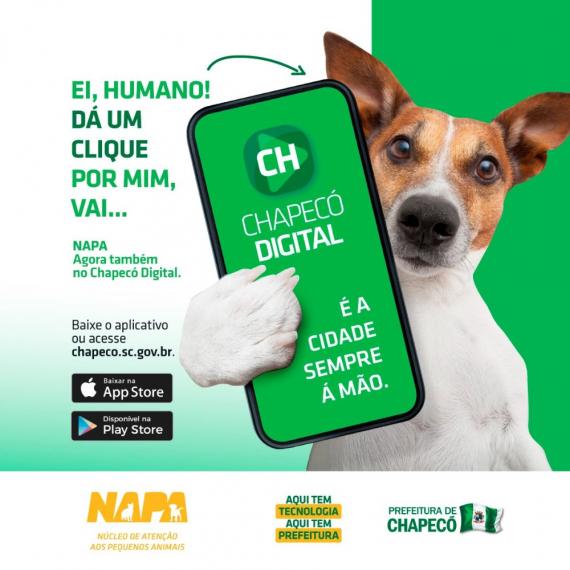 Você conhece o NAPA? Sabe como ele funciona?